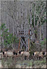Guided Deer Hunts